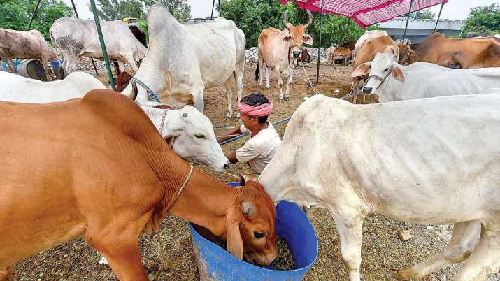 UP cleric hails Allahabad HC suggestion on making cow