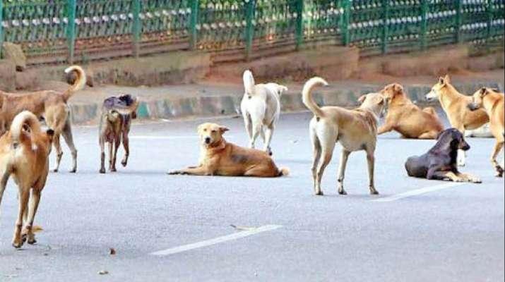 Karnataka: Over 30 stray dogs buried alive in Shivamogga