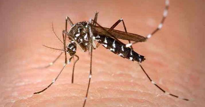 dengue, dengue cases in madhya pradesh, chief minister Shivraj singh chouhan