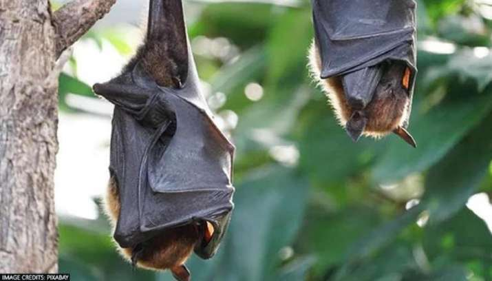 Nipah is synonymous with death, fear and isolation to this