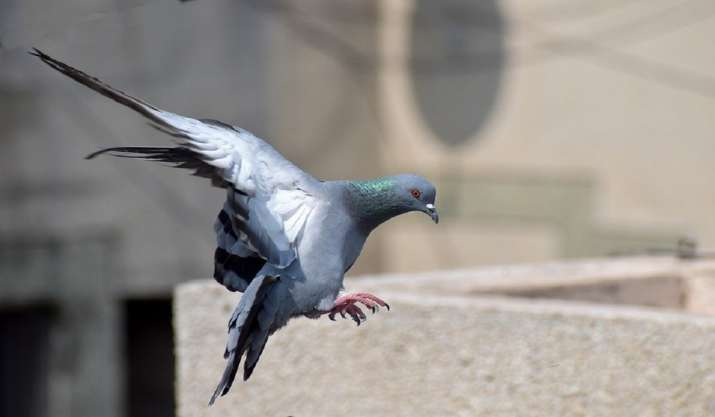 Delhi: 3 apprehended after two injured in clashes over pigeon flying in Seelampur