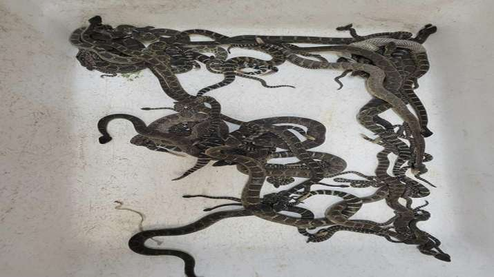Over 90 snakes found under Northern California home
