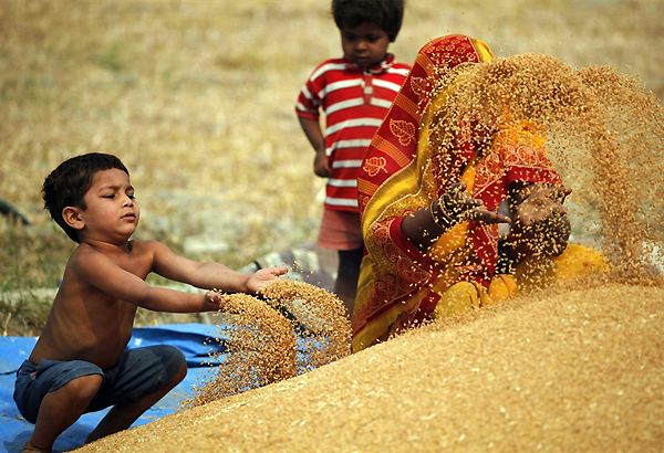 bumper record harvest of 250 mn tons says pm
