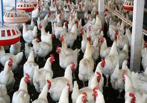 India loses poultry case against US at WTO | IndiaTV News