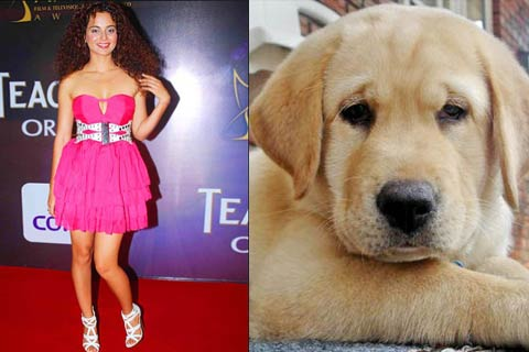 kangna s pet dog chews up her expensive shoes