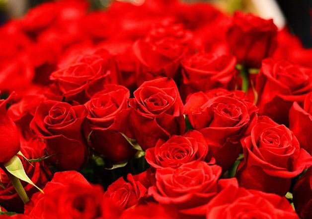 valentine s day nepal imports 100 000 red roses from india