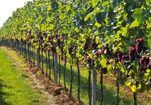 french champagne vineyards added to unesco s world heritage