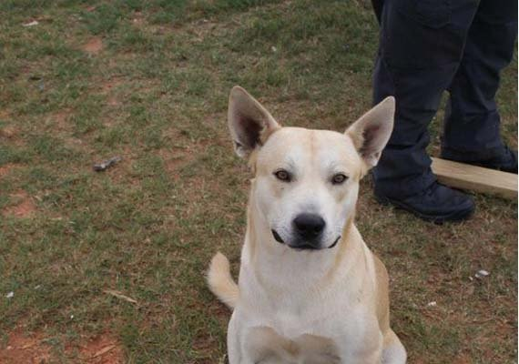 man s own dog helps police bust him on drug charge