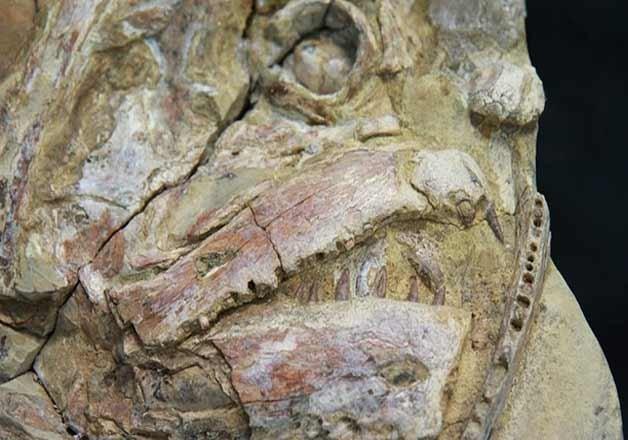100 million year old fossils found in australia