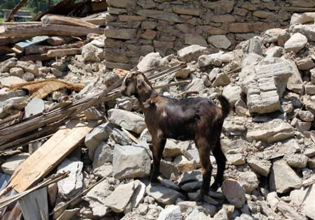 they survived nepal s quake but lost livelihood