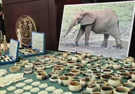 indian businessman in ny pleads guilty to illegal ivory
