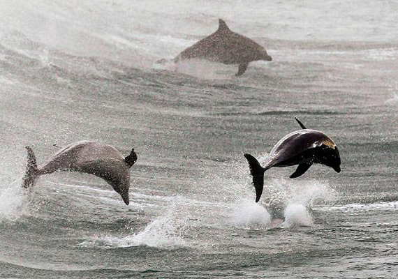 ukraine training dolphins for naval duties