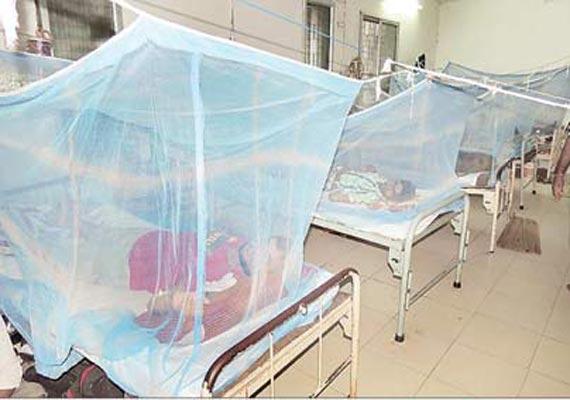 523 people test dengue positive in odisha