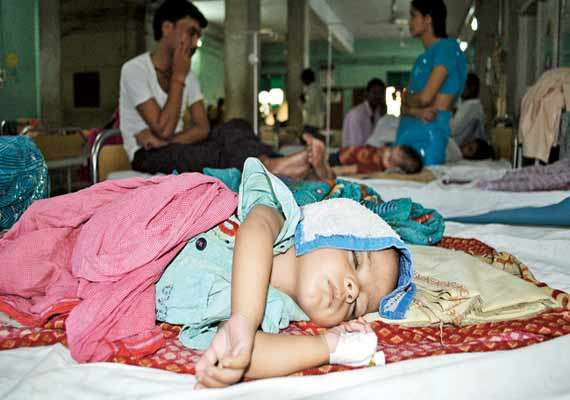 encephalitis toll climbs to 52 in bengal