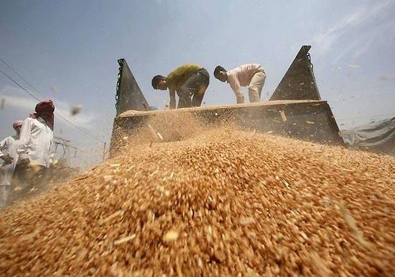delhi assembly polls sheila begins distributing grains