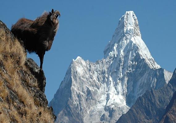 himachal park set for unesco s natural heritage status