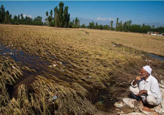 kashmir farmers harvest battered by floods