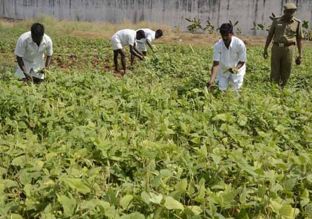 tihar life convicts with good conduct to go green