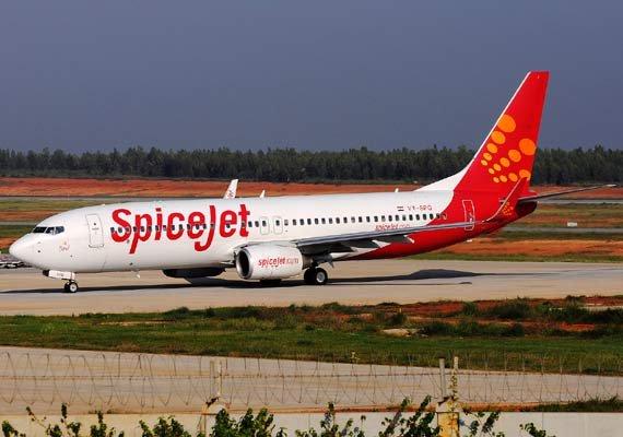 plane hits buffalo on runway spicejet suspends surat flights