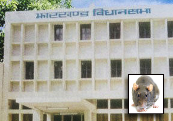 rat comes out from under oppn benches in jharkhand assembly