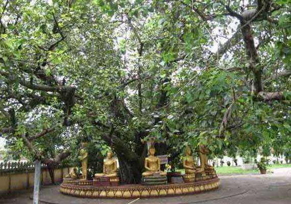 modi to plant sapling of bodhi tree in nepal