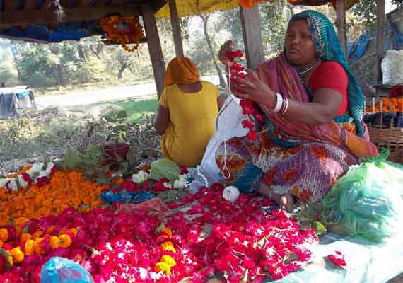 where have all the flowers gone demand peaks in agra