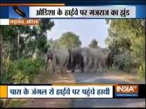 Herd of elephants blocks highway in Odisha