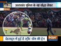 Uttarakhand Police to induct stray in its elite dog squad