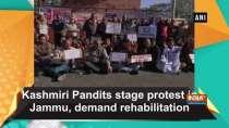 Kashmiri Pandits stage protest in Jammu, demand rehabilitation