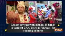 Groom arrived with mehndi in hands to support CAA, cows as