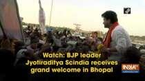 Watch: BJP leader Jyotiraditya Scindia receives grand welcome in Bhopal