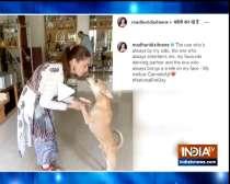 TV stars bond with pets amid lockdown