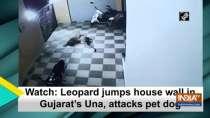 Watch: Leopard jumps house wall in Gujarat