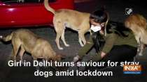 Girl in Delhi turns saviour for stray dogs amid lockdown