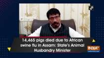 14,465 pigs died due to African swine flu in Assam: State