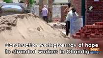 Construction work gives ray of hope to stranded workers in Chandigarh