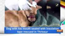 Dog with his mouth sealed with insulation tape rescued in Thrissur