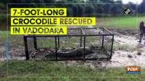 7-foot-long crocodile rescued in Vadodara