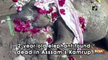 2-year-old elephant found dead in Asssam