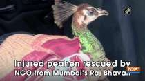 Injured peahen rescued by NGO from Mumbai