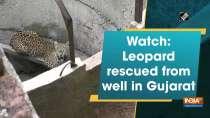 Watch: Leopard rescued from well in Gujarat