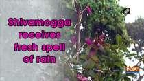 Shivamogga receives fresh spell of rain