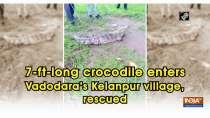 7-ft-long crocodile enters Vadodara