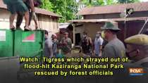 Watch: Tigress which strayed out of flood-hit Kaziranga National Park rescued by forest officials