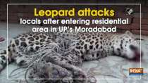 Leopard attacks locals after entering residential area in UP