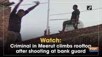 Watch: Criminal in Meerut climbs rooftop after shooting at bank guard