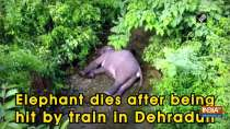 Elephant dies after being hit by train in Dehradun