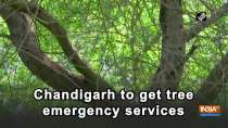 Chandigarh to get tree emergency services