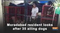 Moradabad resident looks after 35 ailing dogs