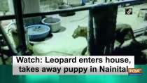 Watch: Leopard enters house, takes away puppy in Nainital